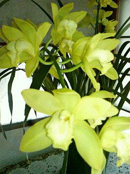春の色・・・